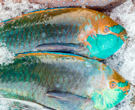 parrotfish: Big parrotfish on ice at the fish market