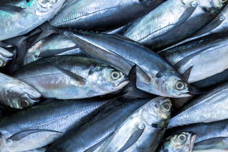 escamas de peces: pescado en el mercado mar exposición hielo. Mariscos en el hielo
