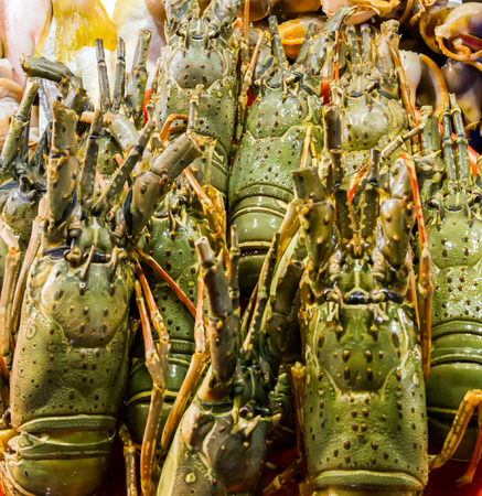 fish exhibition: Fresh raw Lobsters in ice exposition sea market. Seafood on ice