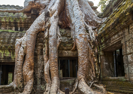 kampuchea: old tree roots in ruin Ta Prohm, part of Khmer temple complex, Asia. Siem Reap, Cambodia. Ancient Khmer architecture in jungle. Stock Photo