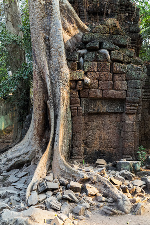 kampuchea: banyan tree roots in ruin Ta Prohm, part of Khmer temple complex, Asia. Siem Reap, Cambodia. Ancient Khmer architecture in jungle.