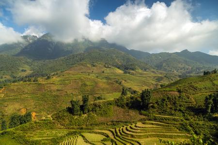 bali province: Landscape of rice terraced paddy field, Sapa, Vietnam