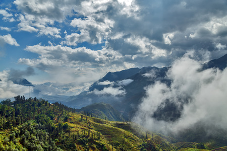 bali province: Rice terraced in mountain Lao cai province northern Vietnam
