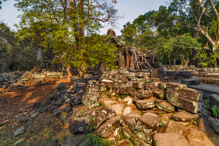 woodland sculpture: Ruins in jungle Angkor Wat, part of Khmer temple complex, Asia. Siem Reap, Cambodia.