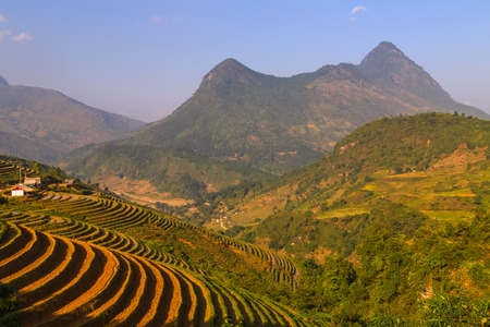 bali province: Landscape of Terraced Rice Field hill Sa Pa. Lao cai province northern mountain Vietnam Stock Photo