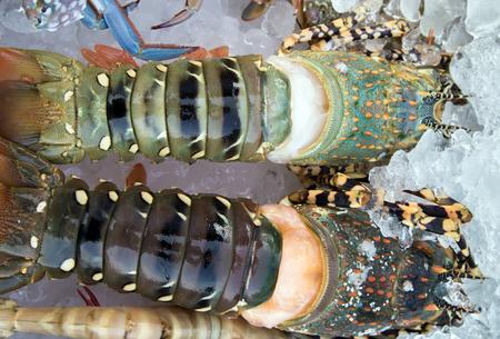 raw lobster: Raw comida de mar de la langosta. Foto de archivo
