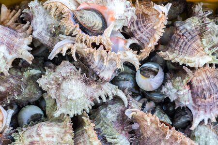 ostracean: Seashell background on sea market. Seafood on ice