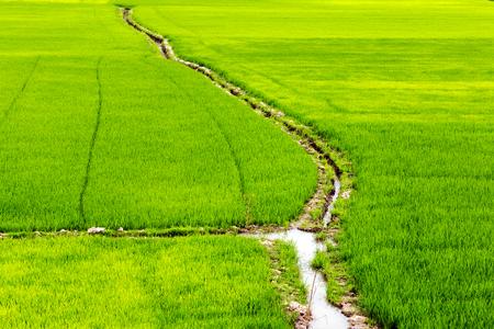 sluice: channel Rice field green grass landscape