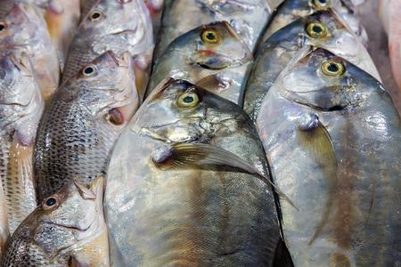 dorada: Dorada fish set on ice sea market. Seafood on ice, background Sea food