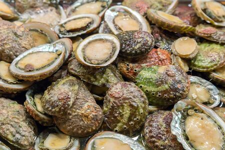 ostracean: Raw oyster sea food Background