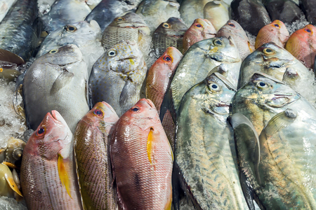 fish farm: fish set on ice sea market. Seafood on ice, background Sea food