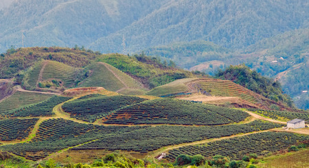 terraced field: Terraced Field hill Sa Pa. Lao Cai province northern Vietnam