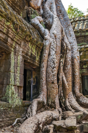 temple Siem Reap, Cambodia. Ancient Khmer architecture in jungle.