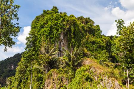 jungle island landscape with palm trees
