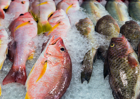 fish in ice: fresh cool fish ice at street market. Seafood on ice, background Sea food