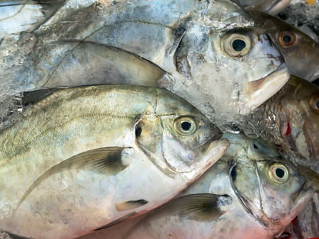 street market: raw fish at street market. Seafood, background Sea food Stock Photo