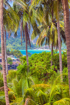 palm View Point Koh Phi Phi Don in andaman sea, Phuket, Krabi, South of Thailand.