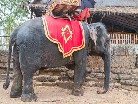 Elephant Sanctuary Jungle trekking Prateh Kampuchea