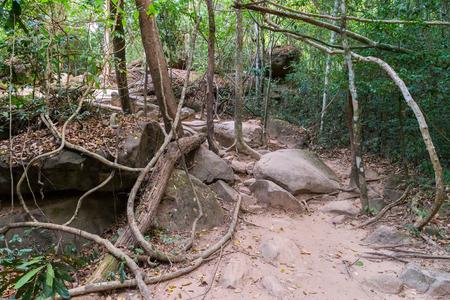 kampuchea: Rain Forest Phnom Kulen National Park in Cambodia kampuchea.