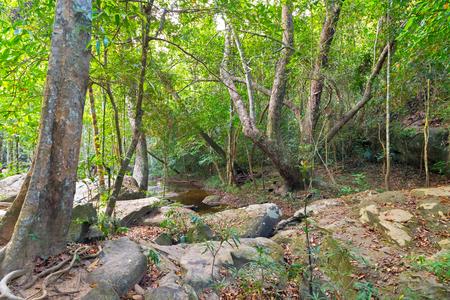 kampuchea: Rain Forest jungle, Phnom Kulen National Park in Cambodia kampuchea.