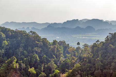 selva verde y el azul cielo paisaje tropical