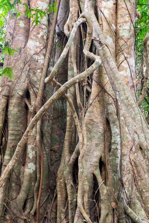 kampuchea: Rain Forest, Phnom Kulen National Park tropical in Cambodia kampuchea. Stock Photo