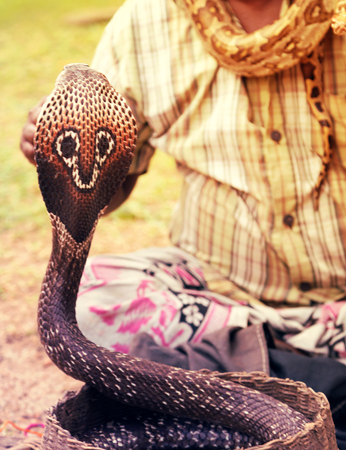 charmer: Snake charmer adult man playing on musical instrument before snake at a basket Stock Photo