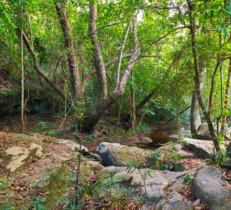 kampuchea: jungle Cambodia kampuchea. Stock Photo