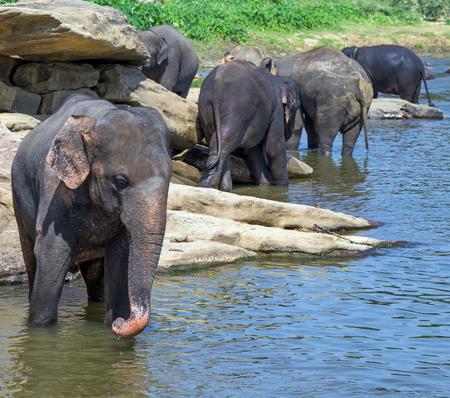 at waterhole: elefante pozo de agua en el río ocio al aire libre