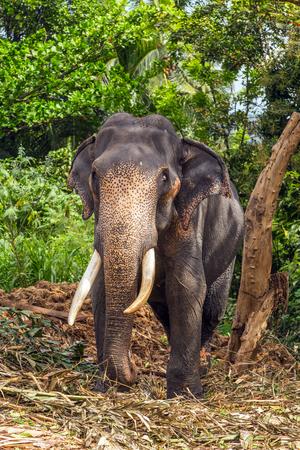wildlife: Elephant wildlife in jungle Stock Photo