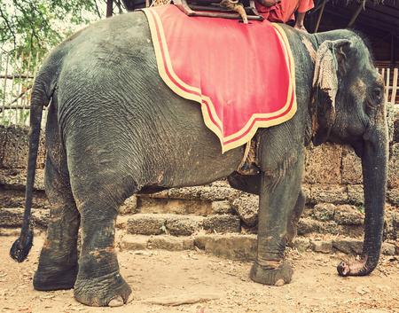 kampuchea: Elephant Sanctuary Jungle trekking Prateh Kampuchea vintage nature background
