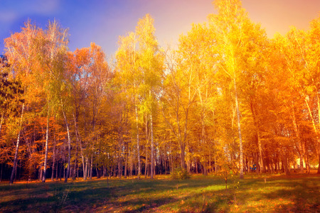 Falls Beauty nature scene. Autumnal Park, Autumn Trees, Autumn forest in Sunlight Rays