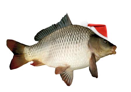 Santa hat on christmas carp isolated on white background