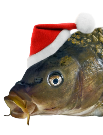 白い背景に孤立したサンタの赤い帽子の頭の鯉のクリスマスの魚
