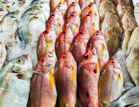 fresh fish seafood in market closeup background. Healthy food concept Stock Photo