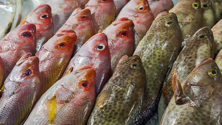 fish on ice exposition sea market. Seafood on ice Stock Photo