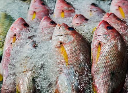 fish on ice exposition sea market. Seafood on ice. background Sea food. Healthy food concept