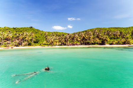 jungle island, beauty girl diver snorkeling in sea, landscape with palm trees
