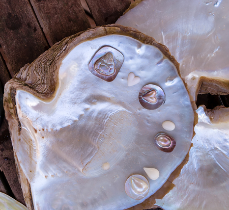 White Mother Of Pearl Pinctada maxima oyster, operation harvests a pearl Buddha Reklamní fotografie
