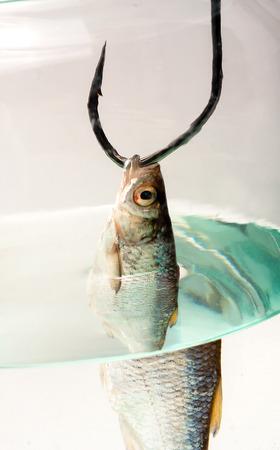 big game fishing carp fish on hook silver