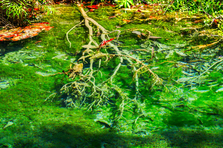 River in Mangrove Forest in Krabi, Natural travel background. Southern of Thailand Stock Photo