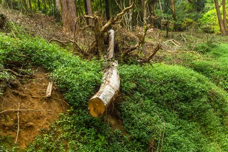 Wet grasslands & Sub-Montane and Montane forest Horton Plains National Park Ohiya,Eco Sri Lanka