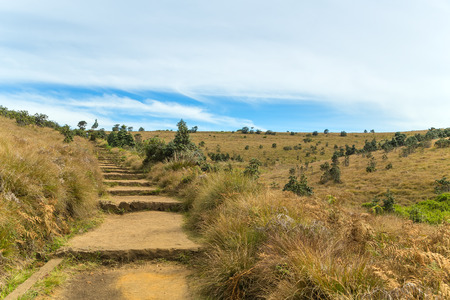 Stone Pathway in a Hills Horton Plains National Park, Central highlands, Sri Lanka