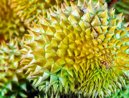 King of fruits Durian background, food tropical.