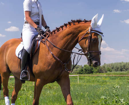 jockey during horse race - Saddle with stirrups. Фото со стока