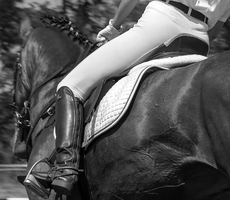 Black horse, Saddle with stirrups on stallion - running horse, black and white photo.