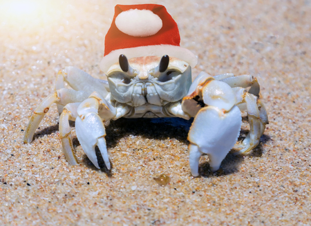 Santa Claus red hat in Crab on the beach island