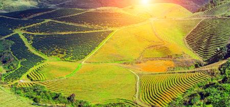 Rice green terraced valley mountain landscapes Lao Cai province, Sapa Viet Nam, Northwest Vietnam.