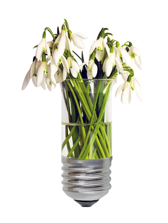 Eco green energy concept bulb, lightbulb with plant snowdrops growing inside isolated on white background.