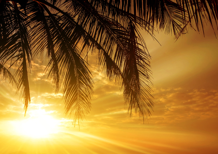 Coconut Palm tree sunlight silhouette sky - Summer nature tropical scene.